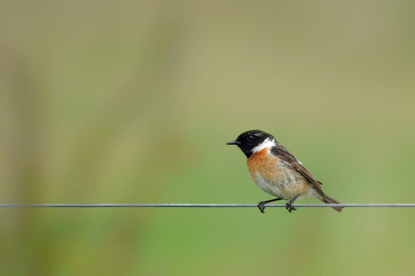 Hofstede Spyk, Texel. Foto's vogelaars: Roodborsttapuit