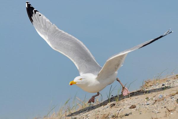 Hofstede Spyk, Texel. Foto's vogelaars: Meeuw